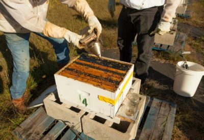 BeeLoved Trading Taking Apart the Hive